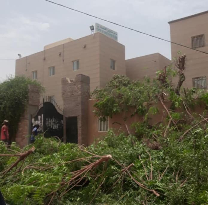 عمال يشذبون الأشجار الموجودة داخل مقر مركز تكوين العلماء (تم تداولها على فيسبوك)