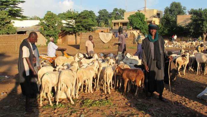 رعاة من الفلان في مالي.