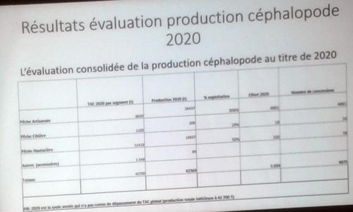 أظهرت العروض أن الكميات المصطادة في 2020 من الإخطبوط بلغت 42700 طنا / الأخبار