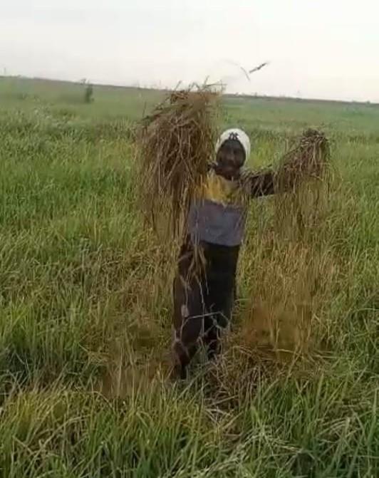 مزارع يلوح بالمحصول التالف في مزرعته جنوب البلاد