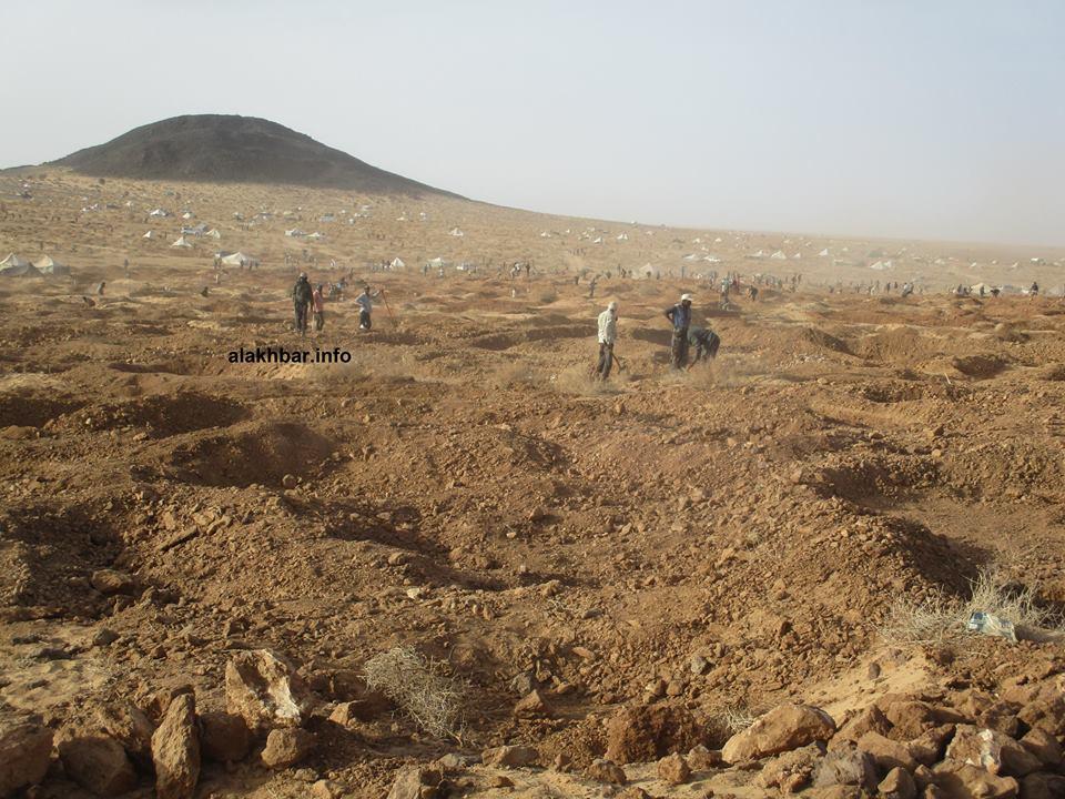 منقبون عن الذهب في منطقة شمال موريتانيا (الأخبار - أرشيف)