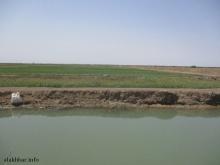 مزراع غربي مدينة روصو بولاية الترارزة ـ (أرشيف الأخبار)