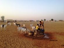 أطفال يسقون ماعز أسرهم من أحد الآبار وسط مدينة اعوينات الزبل شرقي موريتانيا (الأخبار)