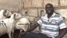 آمادو لي خلال حديثه للأخبار من داخل مخبئ تربية الكباش بمنزله في حي BMD ـ (الأخبار)